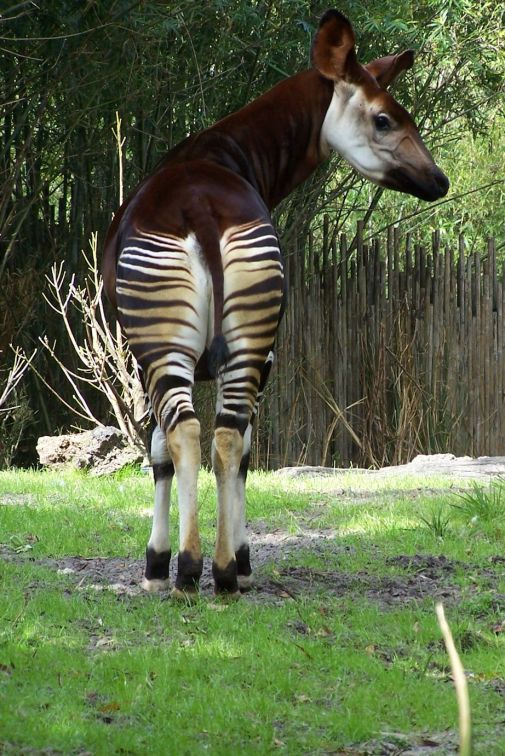 Lularoe antelope